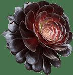 flower.png.481de194133cc025458161fe7e00ce5f.png