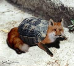 Fox turtle.jpg