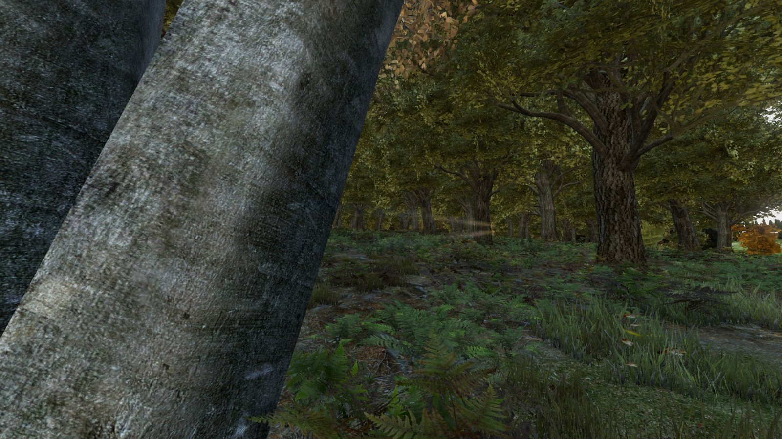 woods by the airfield