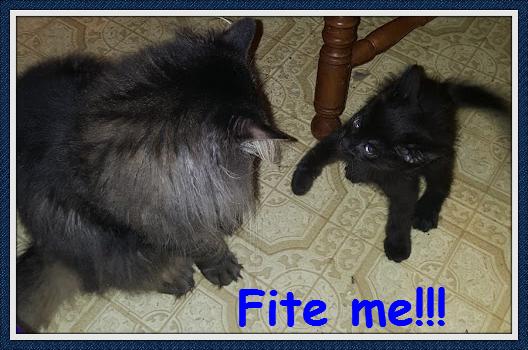Louie-fite me 2_Fotor.png