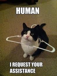 Cat meme.jpg