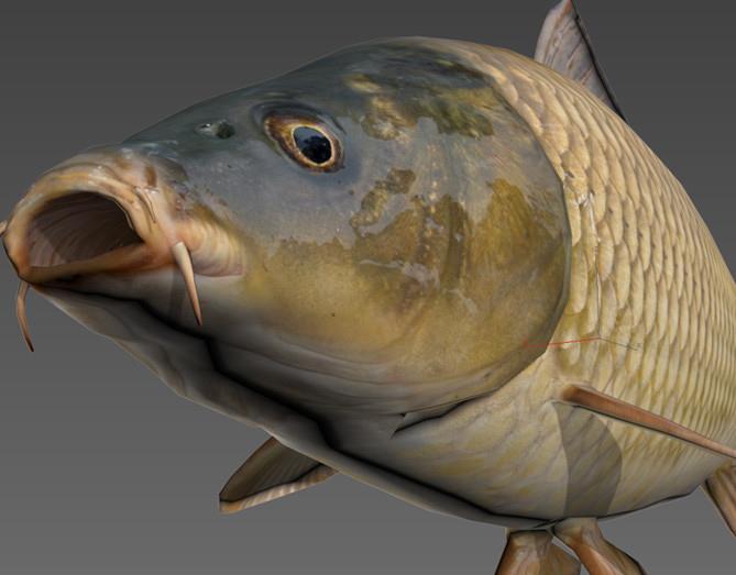 dayz-fish-model-dayz-standalone.jpg