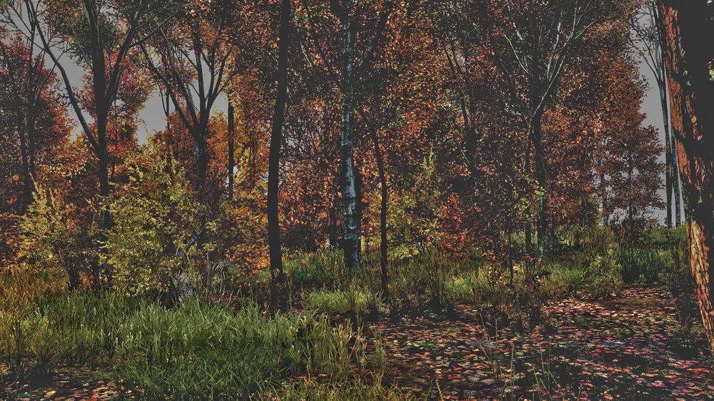 Forest.thumb.jpg.b400bc1e2e1788ad320b70458244811a.jpg