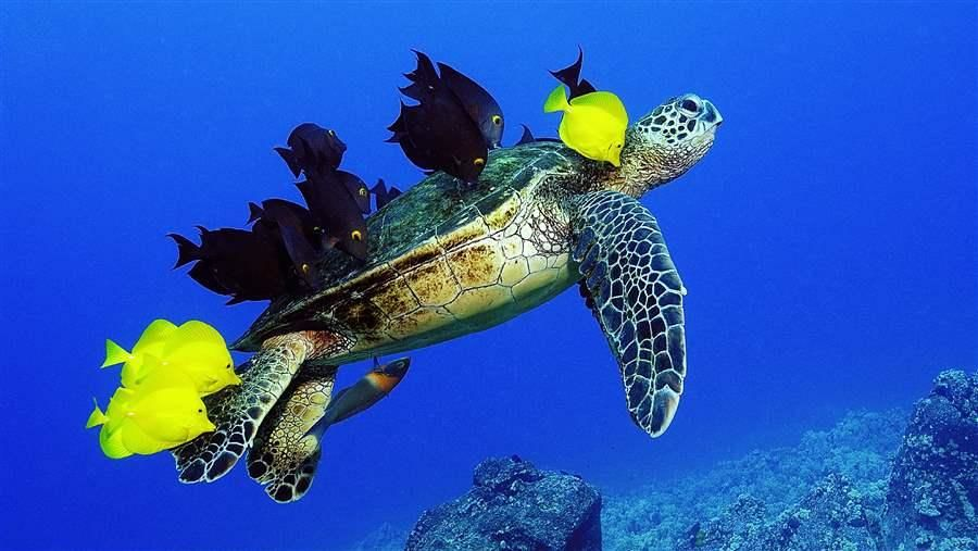 turtle_and_fish_16x9.jpg