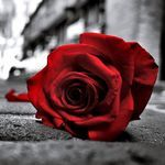 ScarletRose