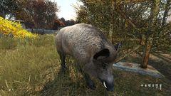 Jamie's Pig