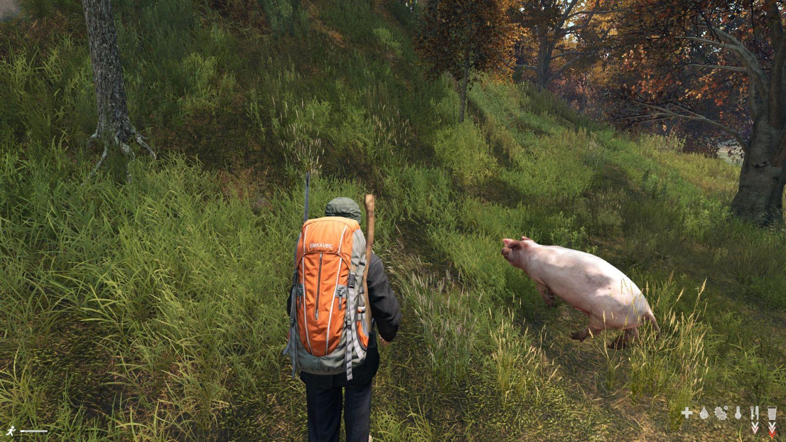 found a piggy friend