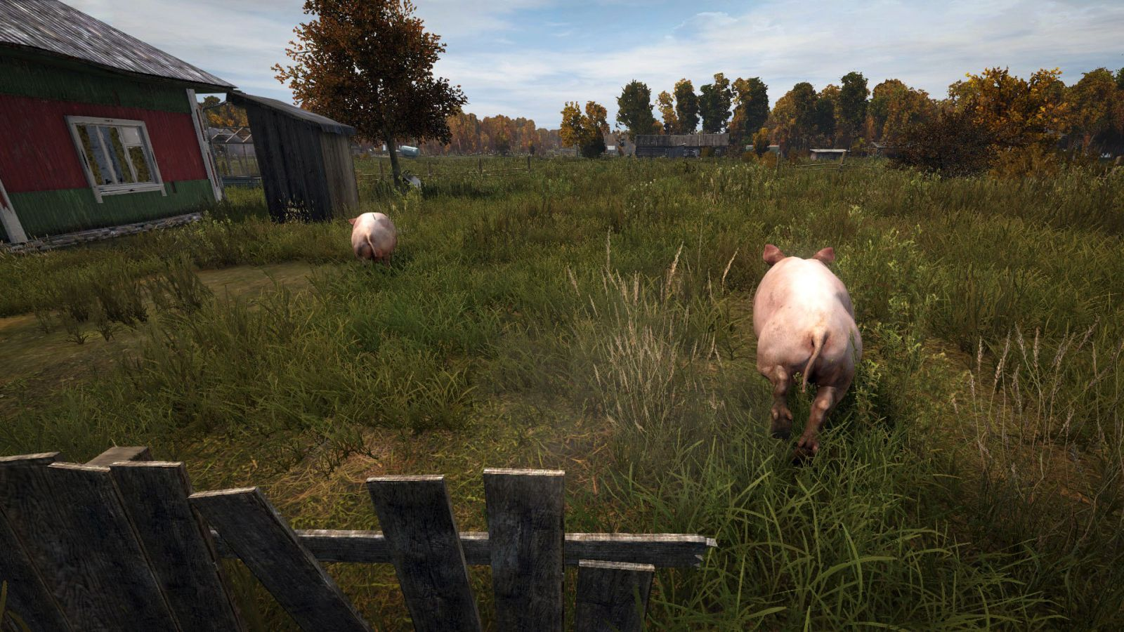 Even pigs are afraid
