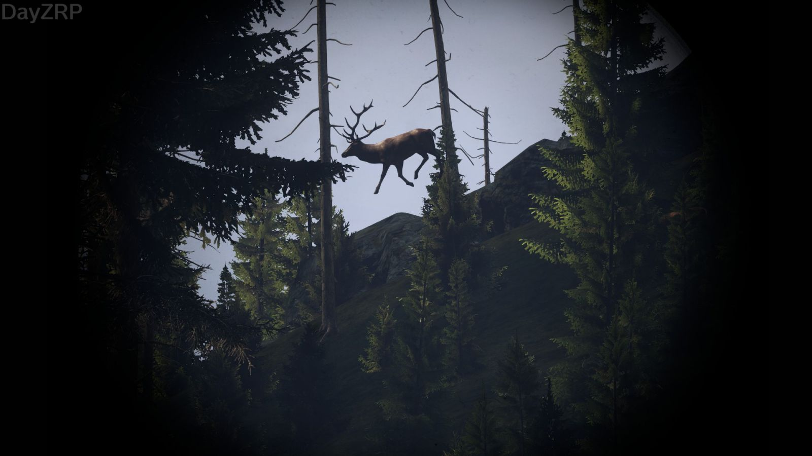 Santa's Reindeer hiding in South Zagorian woods