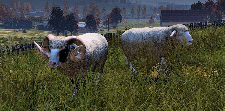Meet the Muttons