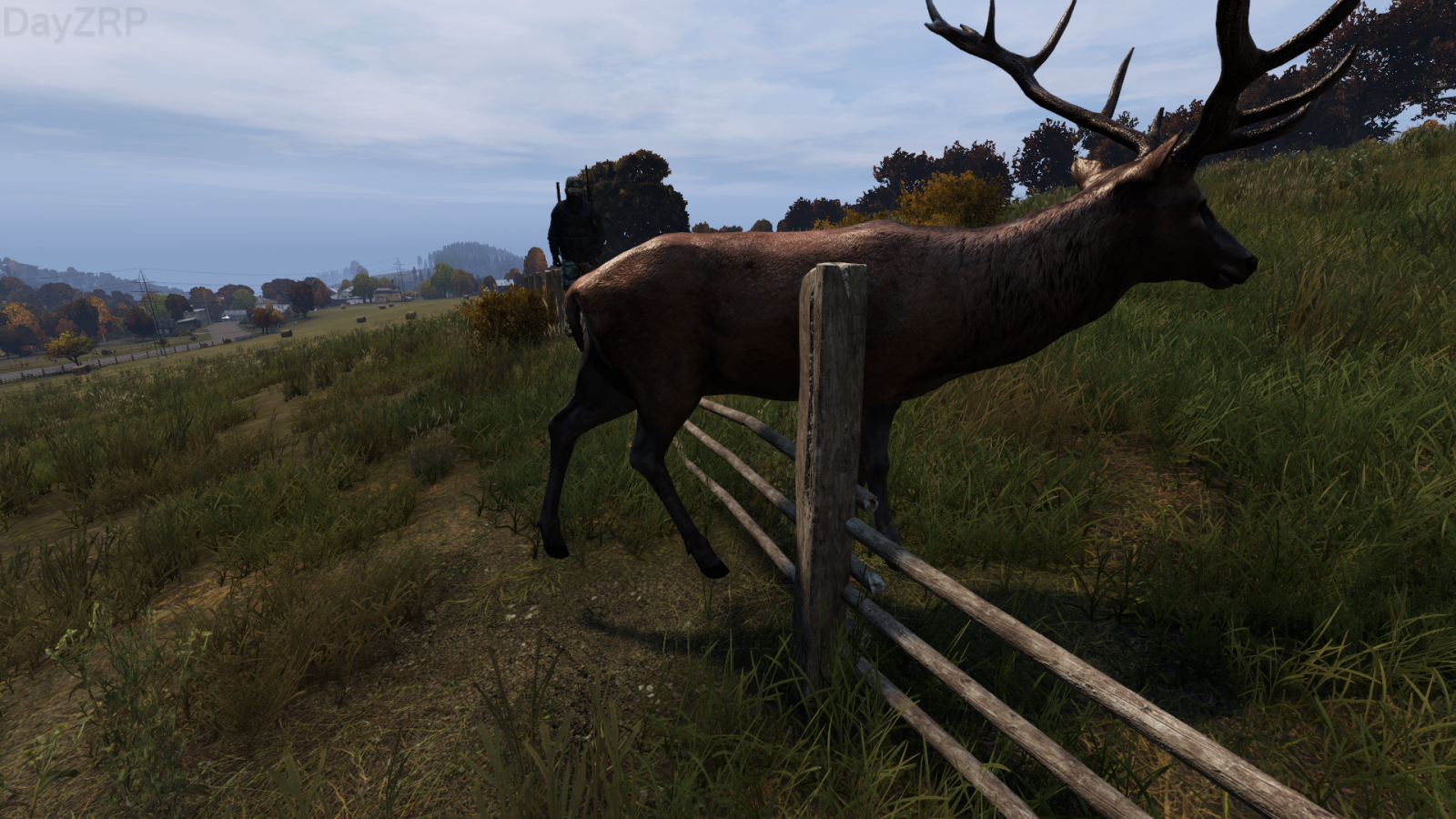 Freeing the stag