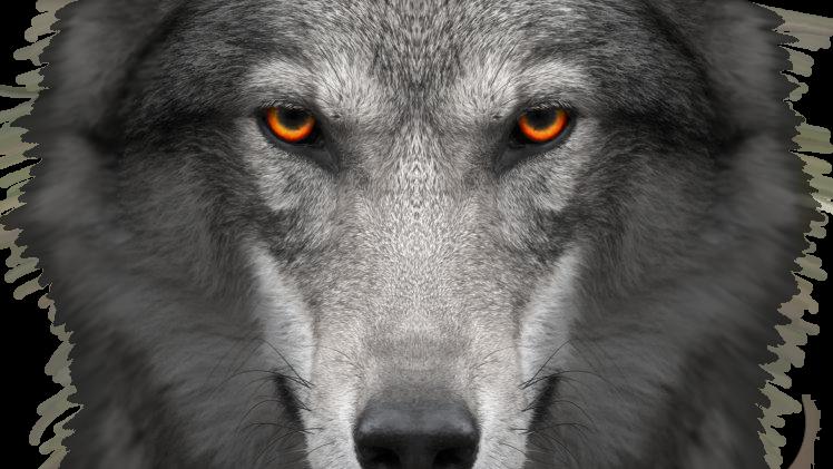 wolfyshaded.png.354c17a4e216681bd1034afb1fdbbda5.png.86f9d1b827617c890b75fa6a27e7fe7f.png