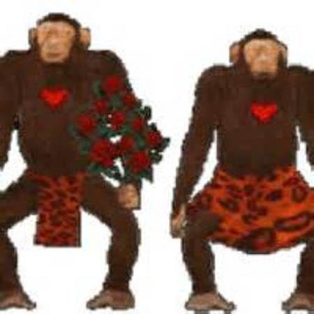 brazil monkeys.jpg
