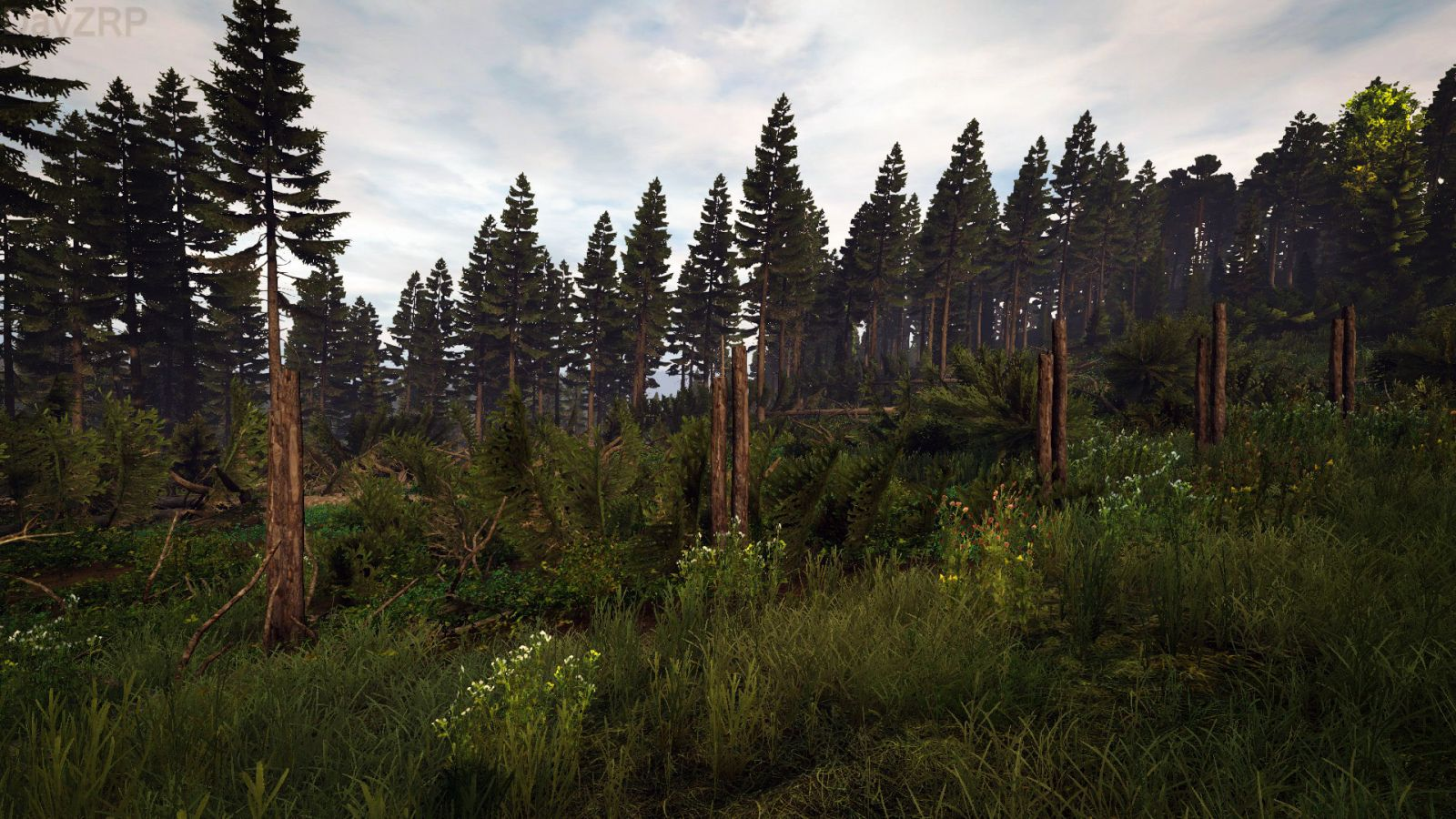 Forest Genocide