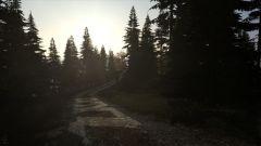 Dayz Forest