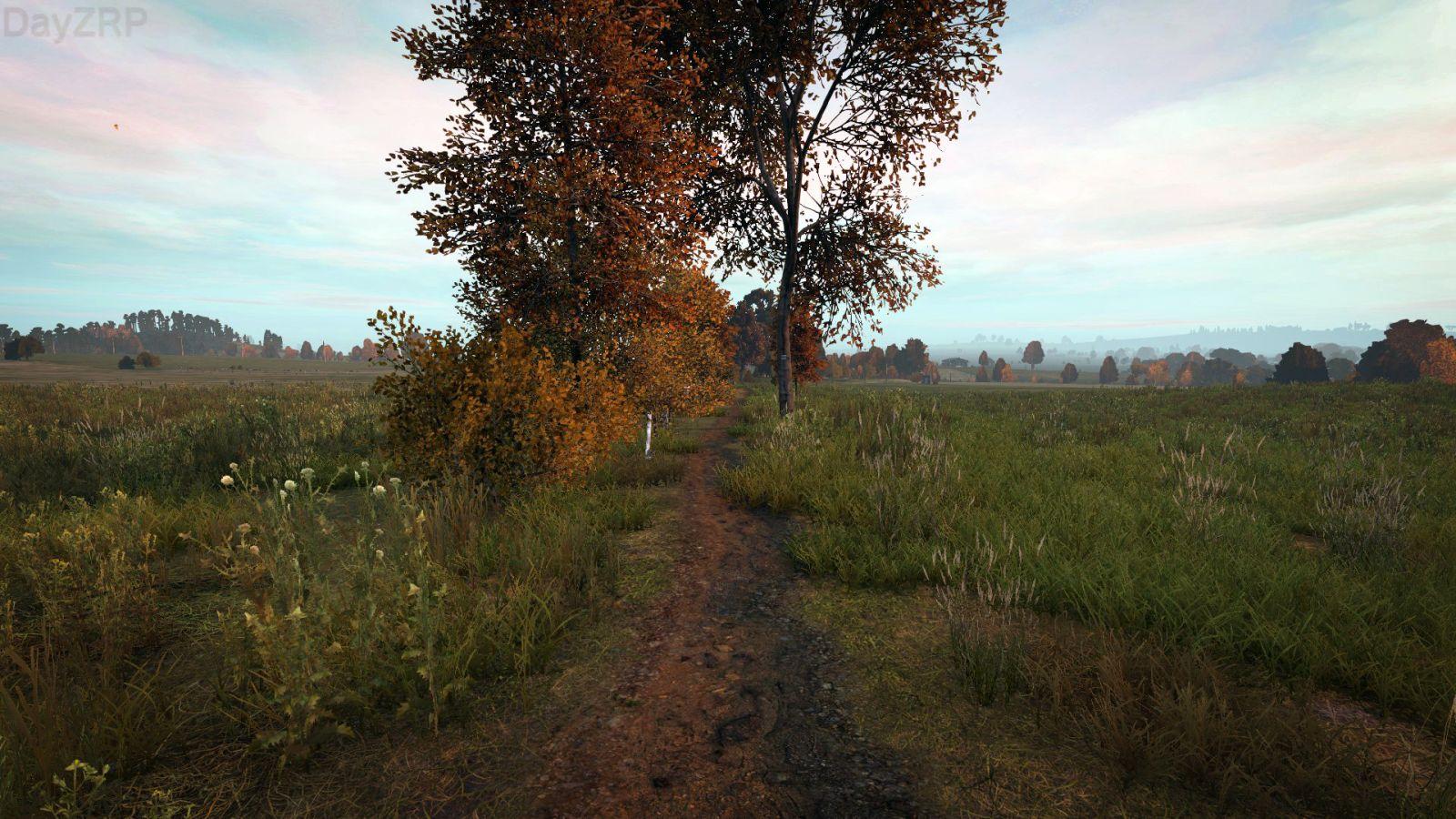 Countryside Dirt Road