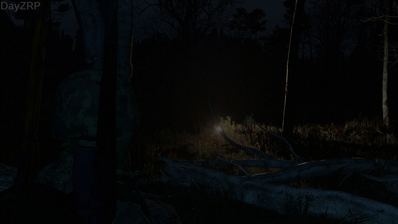 A light in the woods