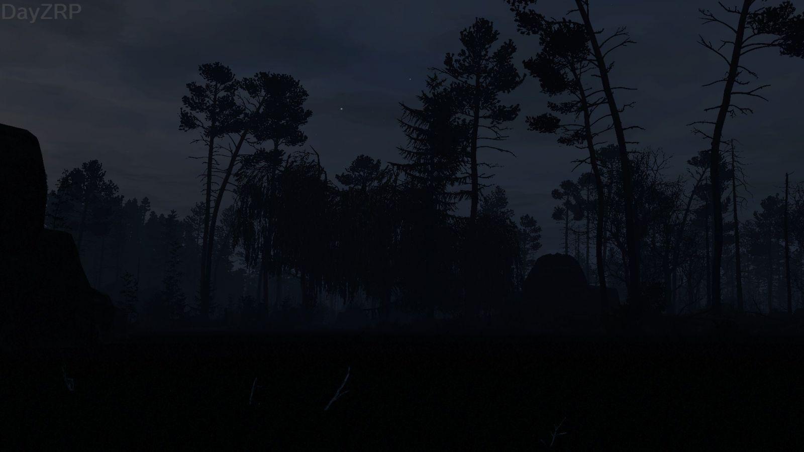 A night in the swamp