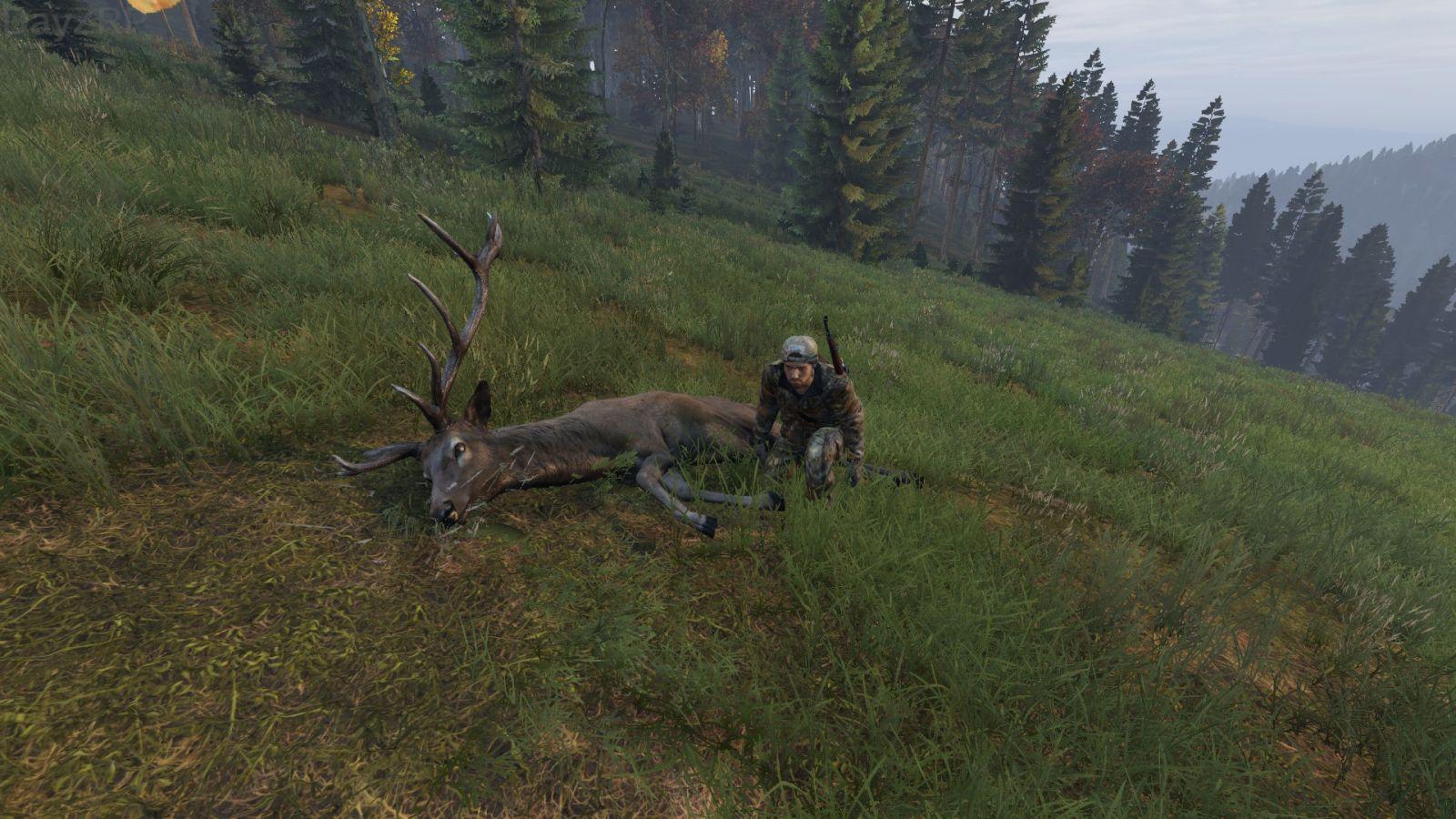 Dayz Hunting