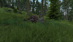 Bear meets Tank