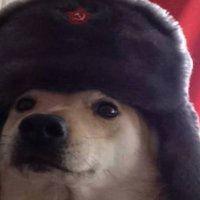 doggo.jpg.0df452ee7c8860ff844835c26ebc9c1d.jpg