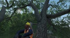"Assistent inspector for health & safety ""Igor"" climbing big tree to assert dominance!"