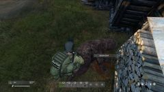 Kill of the Day - First Bear - Teammate Almost died from Bear Attack