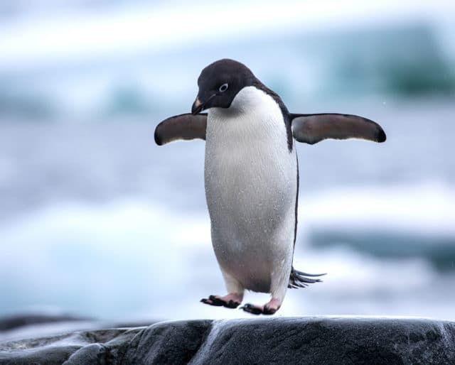 national-penguin-day-640x514.jpg