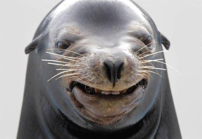 funny-seal-face-picture.jpg.0d354e6a6eb93027922e64467c1c24b3.jpg