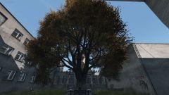 Tree of Life?