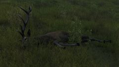 Ever seen Antlers that size before?