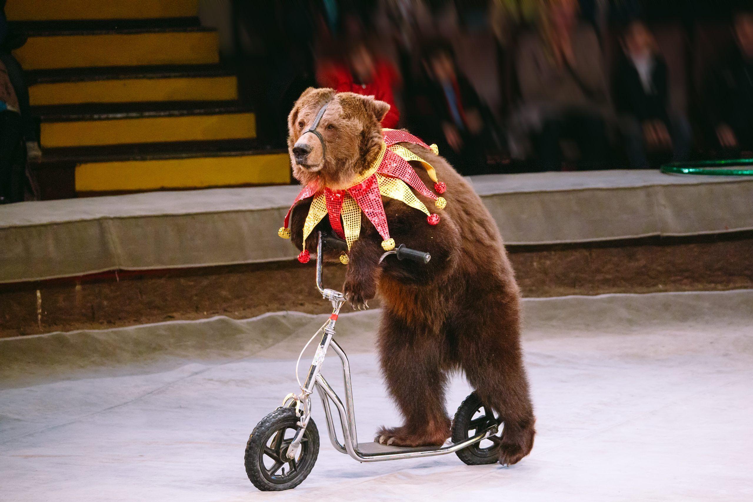 bear.jpg.fbbfe17246981eb6f62625e557281062.jpg